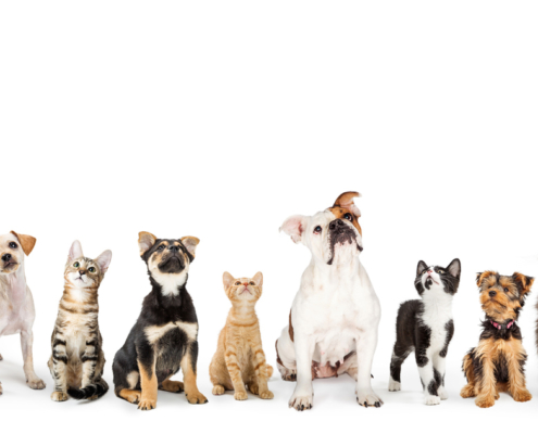 Who gets the dog or cat in a Florida divorce?